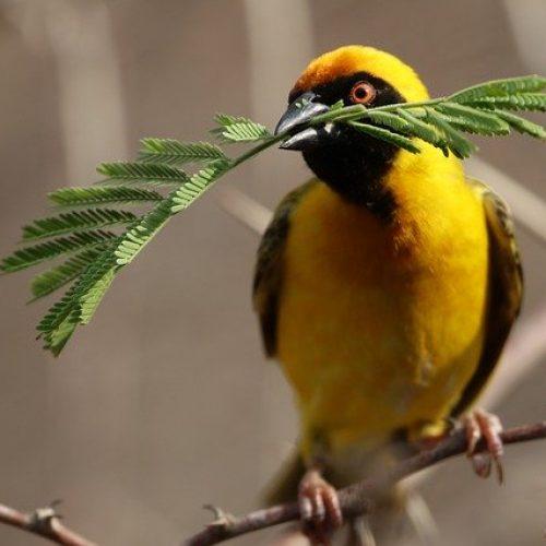 bird-4681934_640