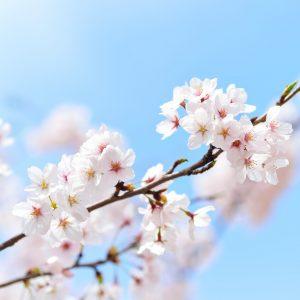 時代國際提供日文會話、日文檢定JLPT...等學日文課程