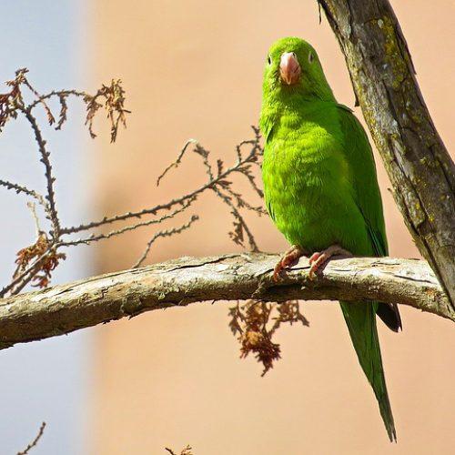 parrot-1161288_640